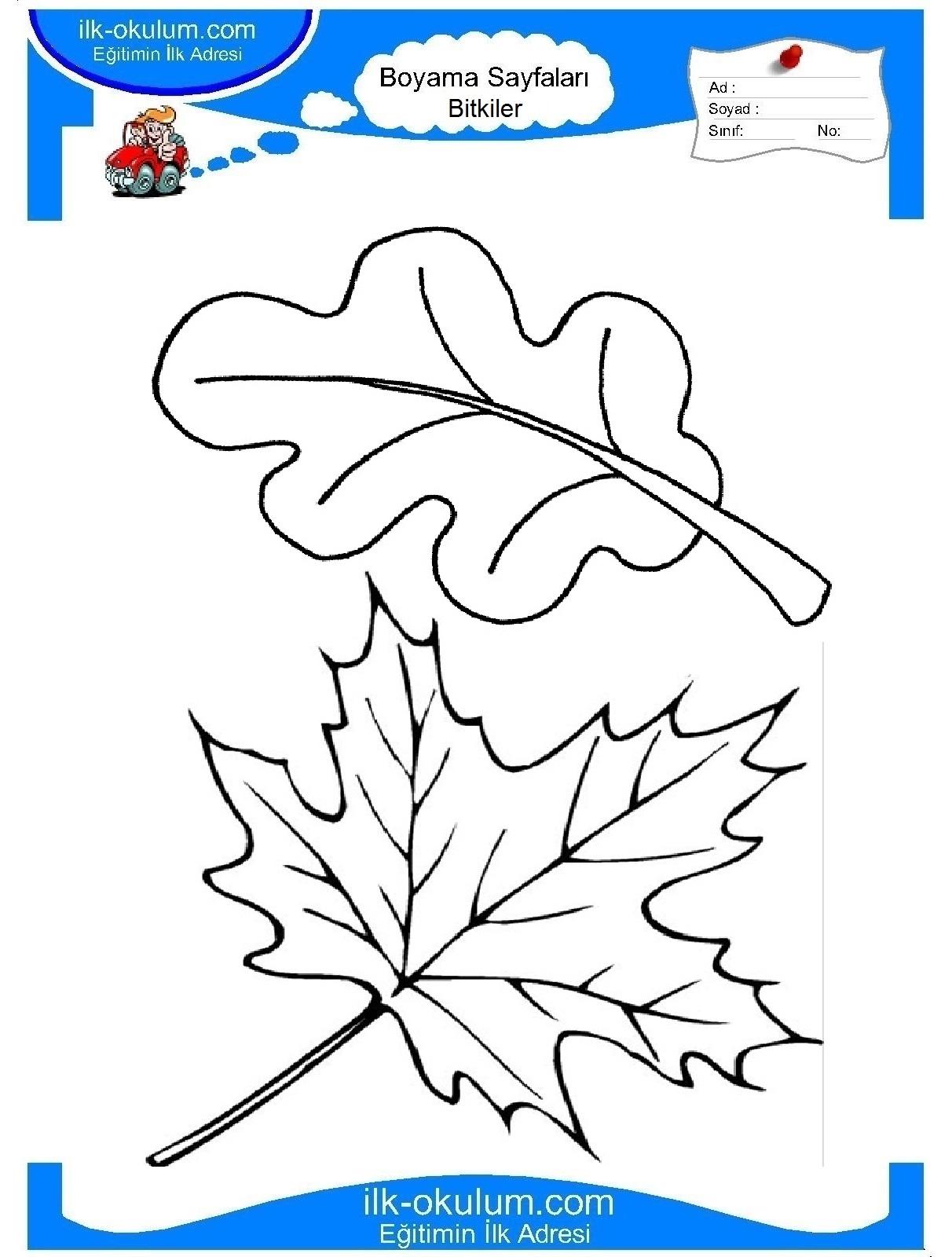 Раскраски листочки деревьев распечатать